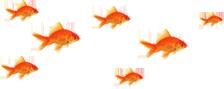 stopka rybki1