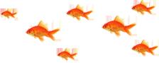 stopka rybki2